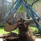 купить Спил деревьев аварийных, сухостойных, над крышами,  кривой рог объявление 15