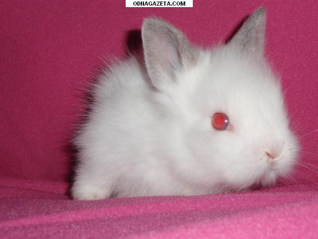 купить Карликовые крольчата. 0984933498. Кривой Рог кривой рог объявление 1