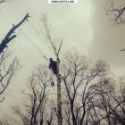 купить Спил деревьев в труднодоступных местах, любой  кривой рог объявление 9