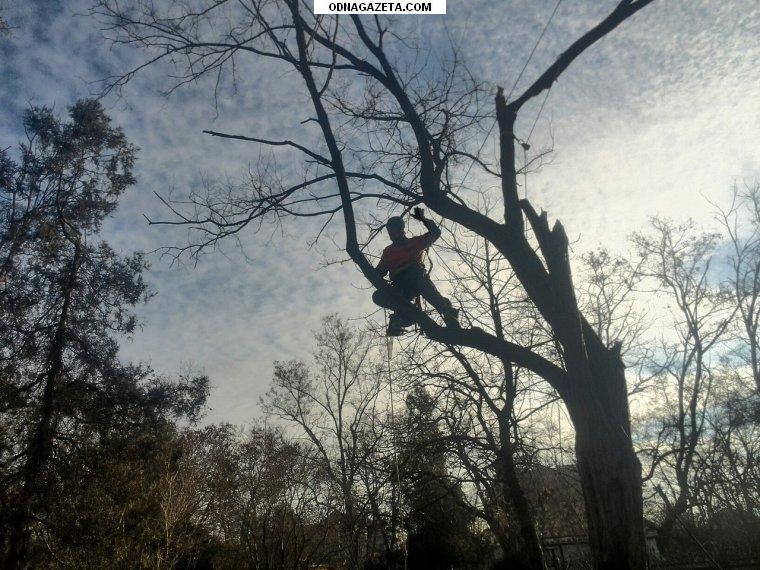 купить Спил деревьев в труднодоступных местах, кривой рог объявление 1