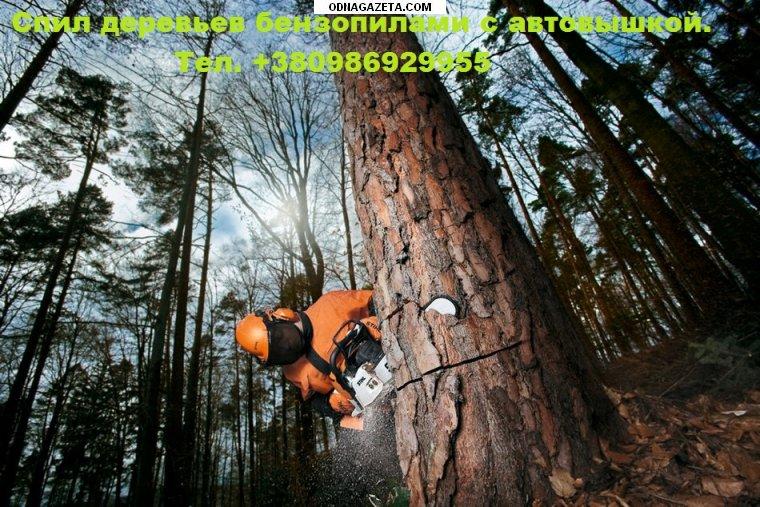 купить Спил деревьев любой сложности бензопилами кривой рог объявление 1