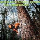 купить Спил деревьев любой сложности бензопилами с  кривой рог объявление 3