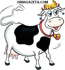 купить Продам Корову на молоко. Тел кривой рог объявление 1