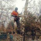 купить Спил деревьев в труднодоступных местах, любой  кривой рог объявление