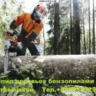 купить Спил деревьев любой сложности бензопилами с  кривой рог объявление