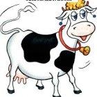 купить Продам Корову на молоко. Тел 0965763603.  кривой рог объявление