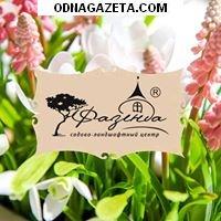 купить Садово – ландшафтный центр «Фазенда» кривой рог объявление 1