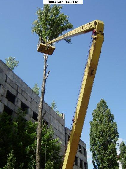купить Cпил (Удаление) и обрезка деревьев кривой рог объявление 1
