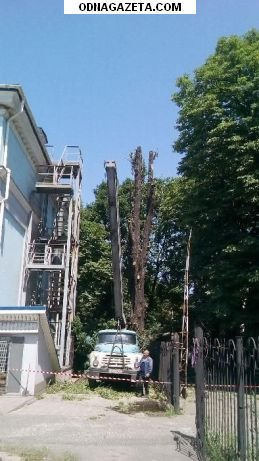 купить Cпил и обрезка деревьев любой кривой рог объявление 1