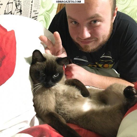 купить Пропала симская кошка в районе кривой рог объявление 1