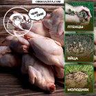 купить Мини-ферма предлагает яйца инкубационные, яйца диетические,  кривой рог объявление