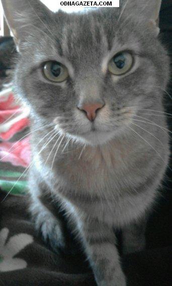 купить Отдам кота в хорошие добрые кривой рог объявление 1