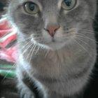купить Отдам кота в хорошие добрые руки,  кривой рог объявление