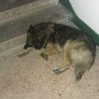 купить Найдена собака, кобель, около магазина Атб  кривой рог объявление