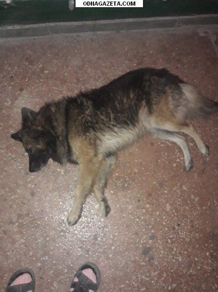 купить Найдена собака, кобель, около магазина кривой рог объявление 1