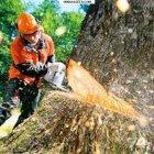 купить Спил деревьев, Спил деревьев, омоложение, санитарное  кривой рог объявление