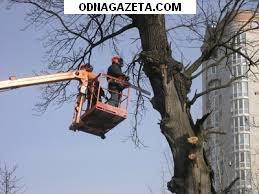 купить Спил деревьев, Спил деревьев, омоложение, кривой рог объявление 1