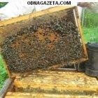 купить Цена договорная! Продам пчелосемьи карпатской породы  кривой рог объявление