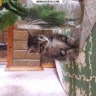 купить Отдам в хорошие руки котёнка (девочка).  кривой рог объявление