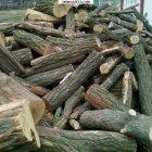 купить Пропоную вашій увазі дрова твердих порід.  кривой рог объявление