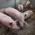 купить Забой, посмалка, разделка свиней, баранов и  кривой рог объявление