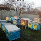 купить тел 0677687991 продам корпуса для пчел  кривой рог объявление