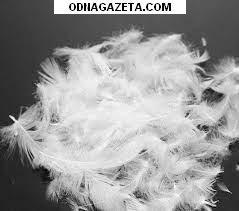купить Куплю старые перьевые подушки и кривой рог объявление 1