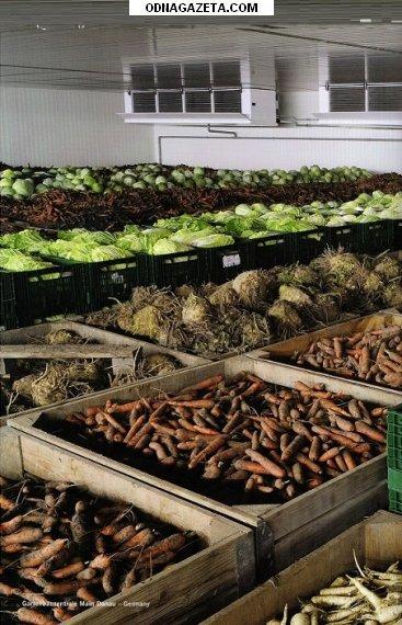 купить Воздухоохладители Для Овощей И Фруктов кривой рог объявление 1