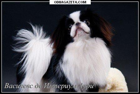 купить Ukrainian Kennel «Igriviy Luchik» (Игривый кривой рог объявление 1