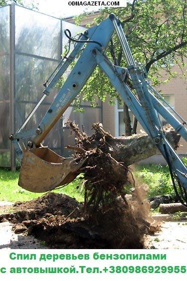 купить Спил деревьев аварийных, сухостойных, над кривой рог объявление 1