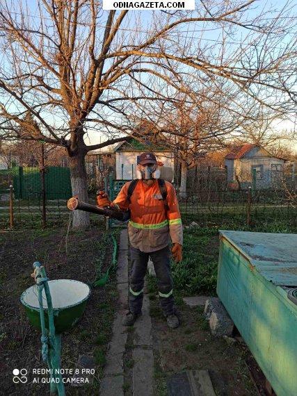 купить Опрыскивание деревьев, кустарников, садов, парков кривой рог объявление 1