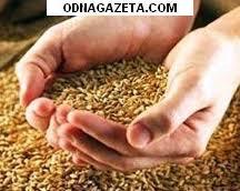 купить Куплю зерно, зерноотходы, т. 096-778-03-95. кривой рог объявление 1