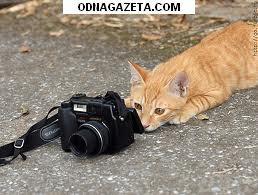 купить Цифровой фотоаппарат продам. 0985111266. Кривой кривой рог объявление 1