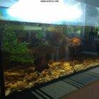 купить Продам аквариум (150 л) с рыбками,  кривой рог объявление