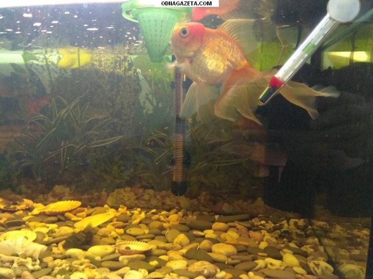 купить Продам аквариум (150 л) с кривой рог объявление 1